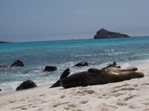 BeachSeals2