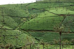 India1581cfs