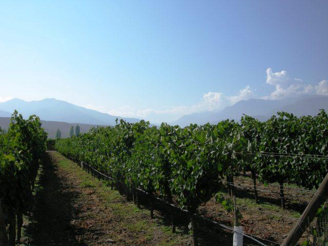 Winery northeast of Santiago