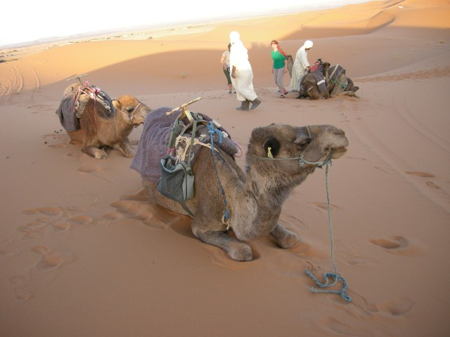 Out on the dunes, giving our camels a break while we climb to a dune top to watch the sun set