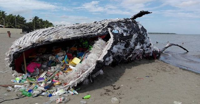 Whales and plastic