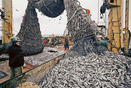Emptying fishing nets