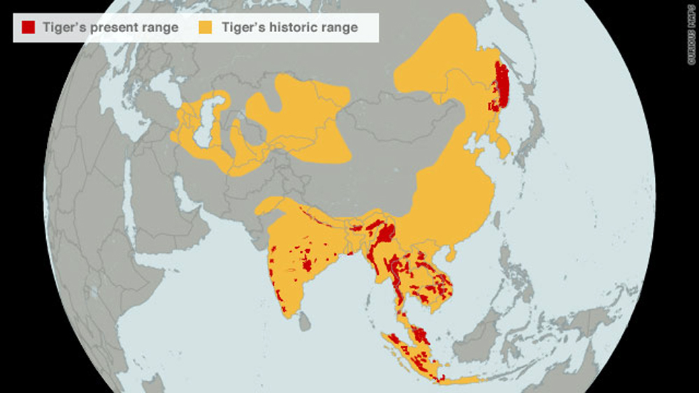 MM-Tigers-WWFmorein US captivity