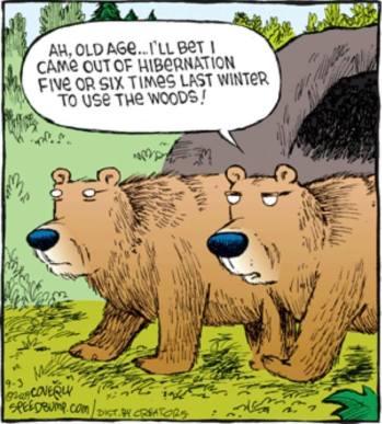 OA-BearPeeing