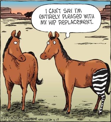 AnimalHipReplacement