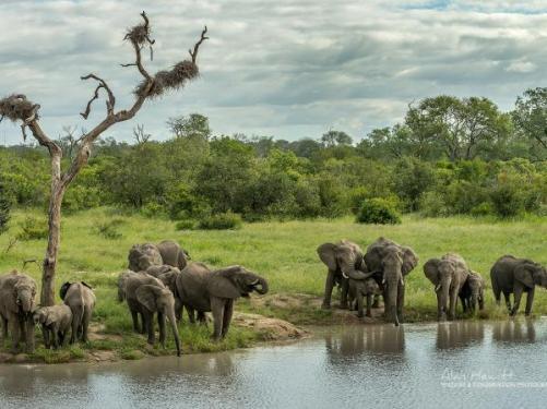 SA-Elephants