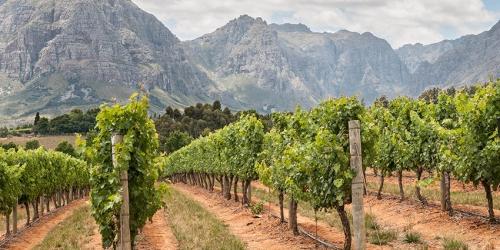SA-Vineyards