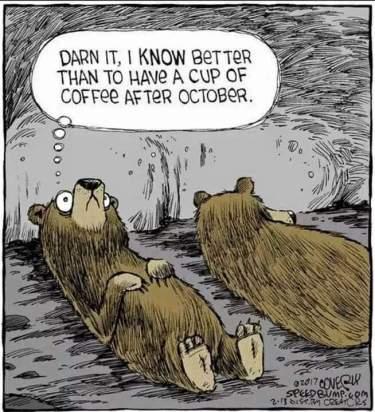 TT-BearCartoon
