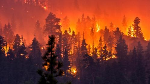 DD-wildfires