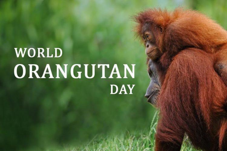Orangutans2