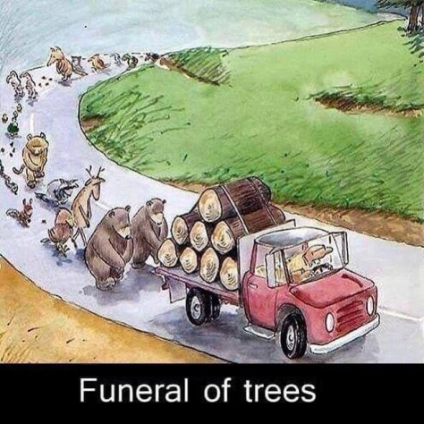 Trees3a